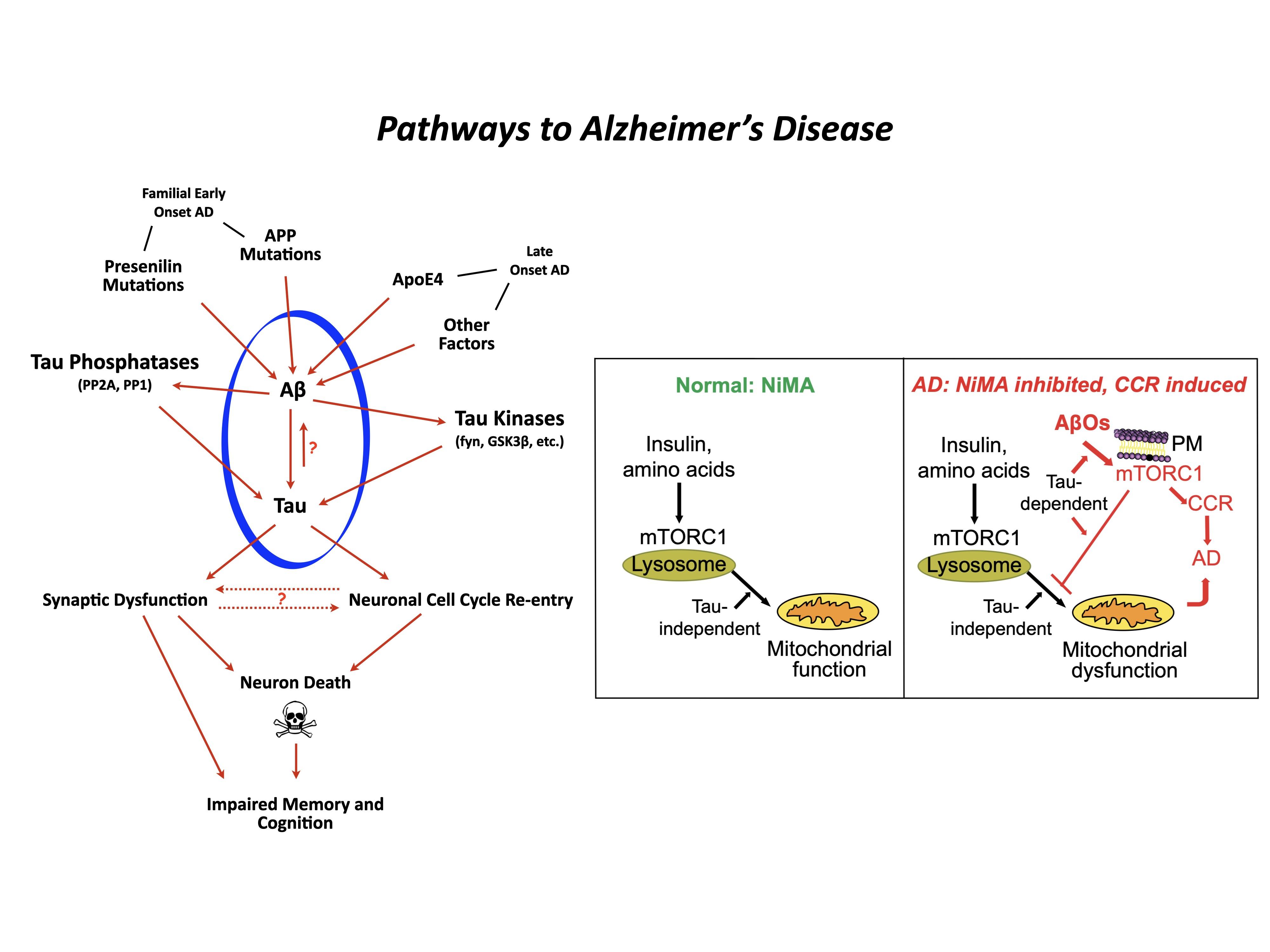 pathways to Alzheimers
