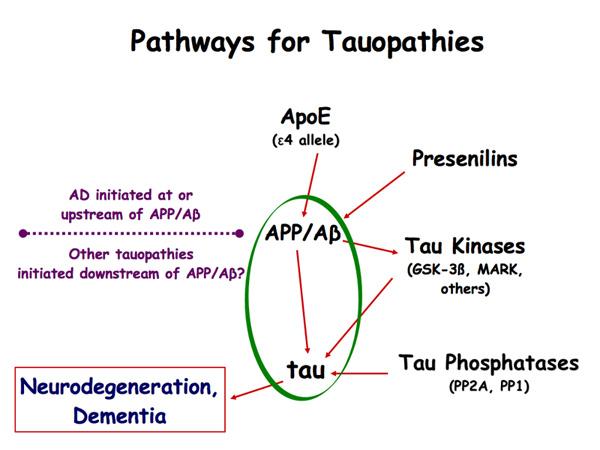 Tauopathy Model